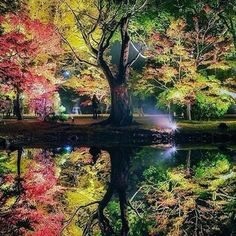 #Repost @capochino67:@Regrann_App from @corno_gabriele -  Evening in Kyoto  #awesome #amazing #cool #colors #magic #majestic  #lit #light #love #life #Hope #Harmony #Horizons #Idyll #Imagine #Inspired #Incredible #Follow #PhotOfTheDay #Wonderland #Fairytale #autumn #reflections #trees #evening #enchanted #kyoto #japan