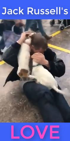 Jack Russell's Love with daddy. Perros Jack Russell, Jack Russell Funny, Jack Russell Puppies, Funny Animal Videos, Cute Funny Animals, Funny Dogs, Jack Russell Terrier, Cute Puppies, Cute Dogs