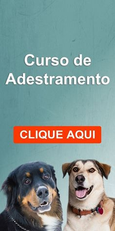 O Que é o Adestramento com Clicker - Adoro Cães - Para Apaixonados por Cães!