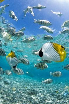 Tropical Fish in Bora-bora Lagoon : Custom Wall Decals, Wall Decal Art, and Wall Decal Murals | WallMonkeys.com