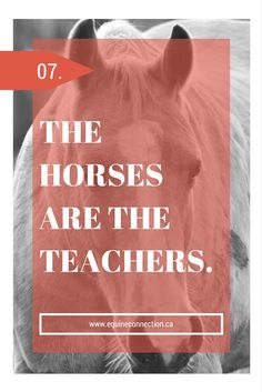 What we can learn from horses is infinitely more valuable than what we can teach them.