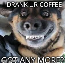 lack of coffee + animals funnies - Google Search  That's funny. One of my cats used to drink my coffee. True story.