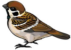 Sparrow PNG Clipart in category Birds PNG / Clipart - Transparent PNG pictures and vector rasterized Clip art images. Birds Painting, Animal Art, Art Images, Bird Clipart, Sparrow Art, Vintage Birds, Bird Artwork, Art, Bird Drawings