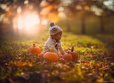 baby sitting on a lwan, surrounded by several orange pumpkins, and dry fall leaves, happy thanksgiving wishes Fall Baby Pictures, Family Photos With Baby, Fall Photos, Fall Images, Holiday Photos, Pumpkin Patch Pictures, Pumpkin Photos, Fall Kids Photography, 1st Birthday Photoshoot