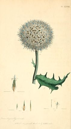 Thirty-eight plates, with explanations : - Biodiversity Heritage Library