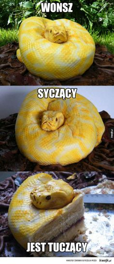 Funny pictures about Just a snake? Oh, and cool pics about Just a snake? Also, Just a snake? Crazy Cakes, Fancy Cakes, Pretty Cakes, Beautiful Cakes, Amazing Cakes, It's Amazing, Unique Cakes, Creative Cakes, Cake Cookies