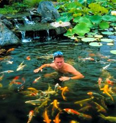 How to Clean a Pond Without Killing Fish Cleanses Ponds and Fish