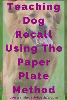 Teaching Dog Recall Using The Paper Plate Method. Teaching Dog Recall Using The Paper Plate Method. Brain Training, Dog Training Tips, Easiest Dogs To Train, Dog Training Techniques, Dog Care Tips, Pet Tips, Pet Care, No Rain, Service Dogs
