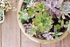 The basics of succulent care. Succulents are easy to take care of and fun to experiment with too! Buy a few and you'll be hooked on succulents forever!