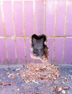 I told you I wanted to go out! But now I don't want to...