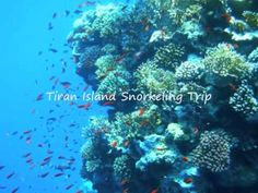 Tiran Island Snorkeling Trip from Sharm el Sheikh