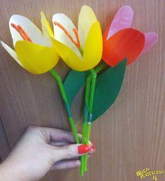 Kubeczkowe tulipany