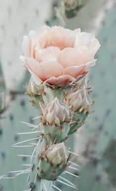 Desert Rose - Dusty greens, deep turquoise, soft peach and brighter pinks.