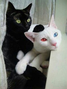 Eyes Of Fire And Ice