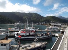 Picton harbour, top of the South Island, New Zealand.