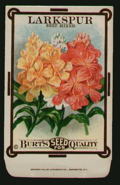 LARKSPUR, Best Mixed, Antique Seed Packet