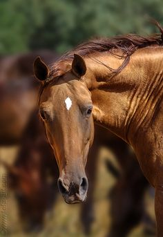 tickled-fancy - Found on equestrian. Most Beautiful Animals, Majestic Animals, Beautiful Horses, Horse Wallpaper, Types Of Horses, Horse Portrait, Horse Photography, Nature Photography, Horse Photos