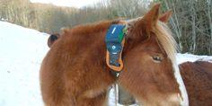 La tinytien de la semana: el collar GPS para ganado.