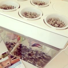 Grow Fresh Herbs and Raise Fish at the Same Time With This Tank