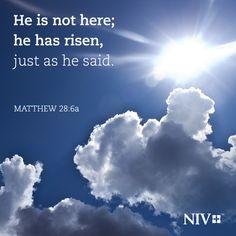 NIV Verse of the Day: Matthew 28:6a