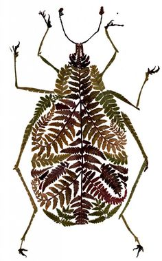Delicate Pressed Fern Leaf Illustrations by Helen Ahpornsiri ~ Fern Weevil
