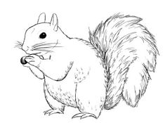 how to draw a squirrel ~ draw central Animal Sketches, Animal Drawings, Art Drawings, Paper Drawing, Painting & Drawing, Sketch Art, Drawing Sketches, Squirrel Illustration, Squirrel Art