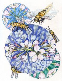 Floral Field Guide – Drawings by Noel Badges Pugh