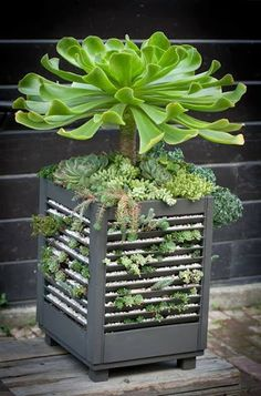succulents planted in shutters upcyled into a planter.