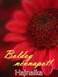 Boldog névnapot, Hajnalka! Name Day, Happy Birthday, Names, Happy Aniversary, Happy B Day, Saint Name Day, Happy Birth Day