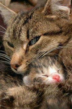 Proteção de mãe.