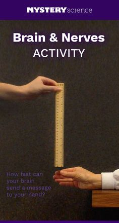 Reaction Time Activity - free hands-on science activity for 4th grade elementary kids. Part of a complete unit on Body: Body, Senses, & the Brain. Meets Common Core and NGSS.