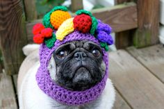 Pickles, the Hat Model (apparently his owner makes pug hats and sells them on Etsy)