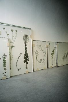 Framed pressed plants