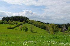 Die Käse-Könige der Auvergne