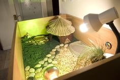 Tortoise with a hamster hut as a house! #thehorror #nothorrificatall #awesome