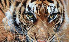"""""""Close Enough"""" - Original Tiger Paintings - Alan M Hunt Wildlife Artist UK"""