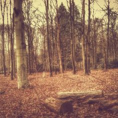 Lurking for inspiration at the woods! #forrest #autumn