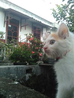 My cat at home
