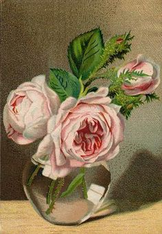 pink victorian roses