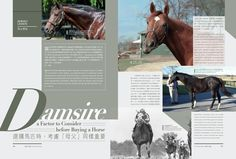 Damsire - A factor to consider before buying a horse Read more http://issuu.com/blacktype/docs/150206_blacktype_issue3… #RT #blacktypehk #horseracing