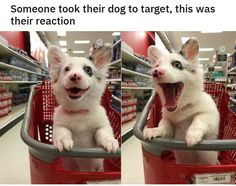 Funny animals memes pictures of the day pics) Cute Animal Memes, Animal Jokes, Cute Animal Pictures, Cute Funny Animals, Cute Baby Animals, Funny Cute, Animals And Pets, Hilarious, Cute Puppies