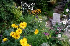 Vivid Heliopsis instead of Sunflowers. The bed needs grasses for texture.