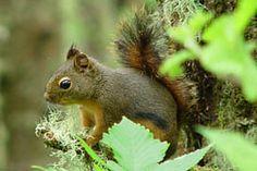 Make a Squirrel Your Ringtone!