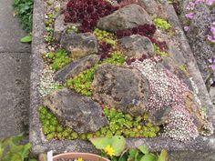 Class 36 - Alpine Garden Society Online Show, 2015 - Alpine Garden Society