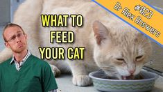 There are so many different opinions when it comes to deciding what to feed a cat. Wet, dry, raw, commercial or home prepared…it can get very confusing to know what's best! Cat Diet, Controversial Topics, Types Of Diets, Health Articles, Pet Health, Cool Cats, Healthy Weight, Commercial, Things To Come