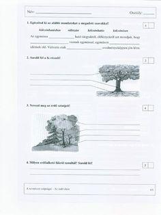 4. osztály, környezet felmérő lapok Lily, Anna, School, Google, Armadillo, Lilies, Schools