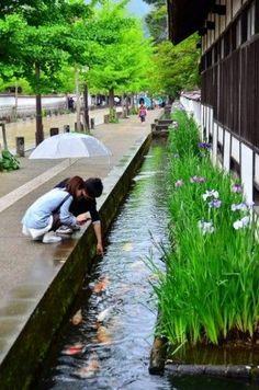 Fish in Japanese drainage Shimane, Tsuwano, Japan Japanese Architecture, Landscape Architecture, Landscape Design, Koi Fish Pond, Fish Ponds, Japan Landscape, Pond Design, Ponds Backyard, Farm Gardens