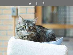 Alf (A672179)