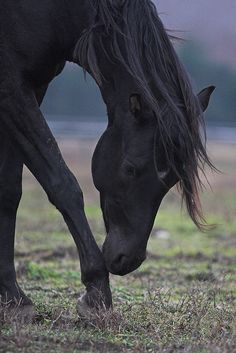 ☀Shagya foal at Ölbő by rstefanits on Flickr*
