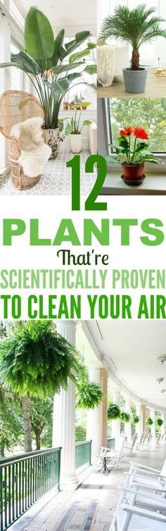 These 12 Plants Are So GORGEOUS And Will Clean The Air Inside Your Home ASAP!